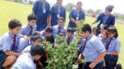 Environmental Education: Component Of Sustainable Development